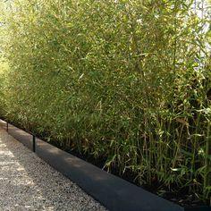 Plantenbakken met bamboe