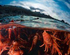Image result for Monterey