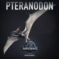 Pteranodoa