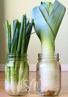 Container Gardening - Grow Leeks and Onions in a Jar!Who knew? You can grow leeks and onions in a jar. It is really easy and you won Green Onions Growing, Growing Greens, Growing Veggies, Growing Plants, Herb Garden, Vegetable Garden, Garden Plants, Garden Water, Garden Beds