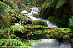 yarra ranges - Google Search