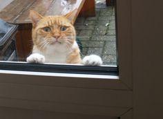 petsmao-外面開始下大雨 貓咪囧臉在門外求救