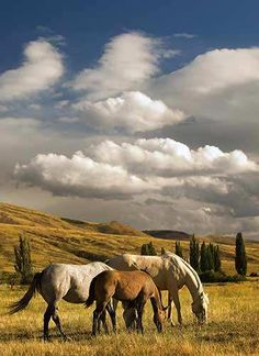 Love this Robert Dawson Photo...I dream of a view like this on a ranch