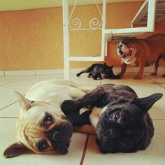 Community Post: The Cutest Bulldog Family You'll Ever See