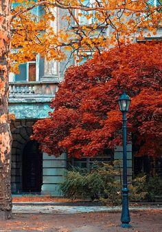 Autumn, Paris, France photo via phyllis