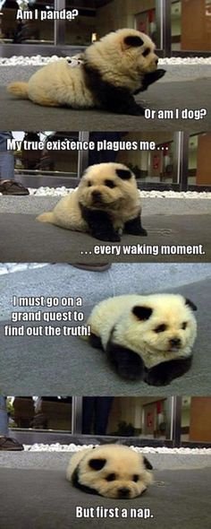 Funny pictures about Thoughts of a Panda Dog. Oh, and cool pics about Thoughts of a Panda Dog. Also, Thoughts of a Panda Dog. Humor Animal, Funny Animal Quotes, Funny Animal Pictures, Cute Funny Animals, Cute Baby Animals, Funny Cute, Funny Dogs, Weird Pictures, Funny Humor