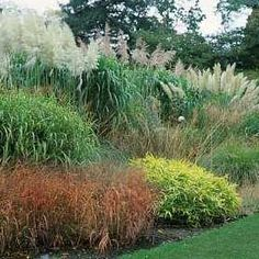 gardening with grasses - Bing Images