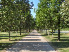 Parc des Lilas à Vitry-sur-Seine - Allée principale