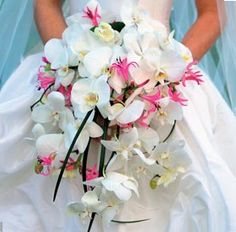 gorgeous bouquet with Nerine Lily's and Phaleonopsis Orchids