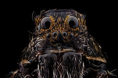 Birth control and monogamy can be controversial for spiders, too.