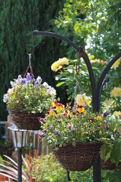 Hanging baskets...Garden Of Eden