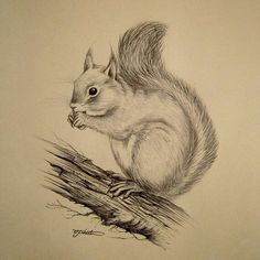 Vintage Ink Sketch Drawing of a Squirrel by QueensParkVintage art sketch Pencil Art Drawings, Realistic Drawings, Art Drawings Sketches, Cute Drawings, Sketch Drawing, Good Sketches, Sketching, Drawing Tips, Animal Sketches