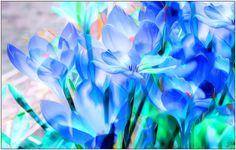 Beauty Blue Flowers..