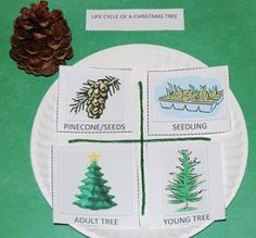 Life Cycle of a Christmas Tree Craft for Preschool! - The Preschool Toolbox Blog - free printable to learn about conifer trees