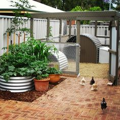 Backyard Chickens Archives - Suburban Farmer | Suburban Farmer