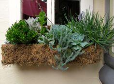 Succulents in window box