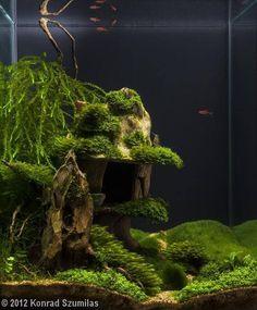 5ee5ae01eb9bf3e758a1d92b4afe0dea--aquascape-aquarium-nano-aquarium.jpg (642×778)