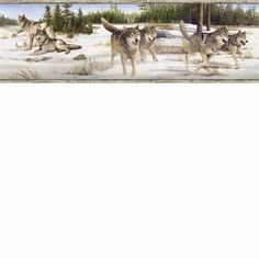 Brewster Home Fashions Outdoors Shiloh Wintry Wolf Portrait x Wildlife Embossed Border Wallpaper Color: Grey Brick Wallpaper Roll, Paintable Wallpaper, Embossed Wallpaper, Wildlife Wallpaper, Wolf Wallpaper, Wallpaper Borders, Wall Borders, Botanical Wallpaper, Snowy Mountains