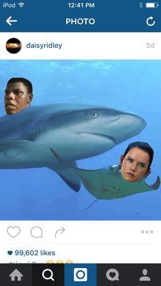 Star Wars manta rey and shark finn Rey Star Wars, Star Wars Art, Star Trek, Shark Meme, The Force Is Strong, Fandoms, Star Wars Humor, I Love To Laugh, Hunger Games