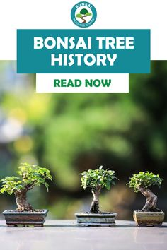 Are you curious about how bonsai trees came to be? Discover the full history of bonsai trees and how best to care for bonsai trees in your home. Bonsai Plants, Bonsai Trees, Fiddle Leaf Fig Tree, Full History, Spider Plants, Plant Care, Houseplants, Succulents, Indoor