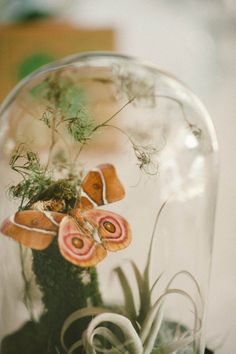 Cloche display with moth and airplant for wedding centerpiece by Crimson Horticultural Rarities. http://www.crimsonhort.com/