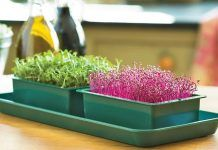 Everything About Growing Microgreens: Best Microgreens To Grow