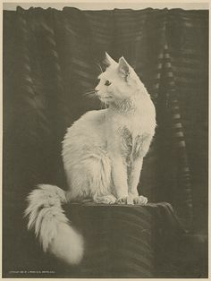 White cat by Boston Public Library on Flickr. L. Prang & Co., 1895.