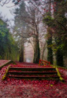 Autumn walk... Jenkinstown Wood, County Kilkenny, Ireland
