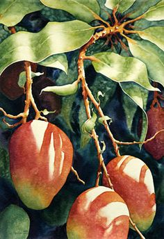 """Mango Mania"" - Sue Archer, watercolor {contemporary artist fruit still life botanical painting #loveart} archerville.com"