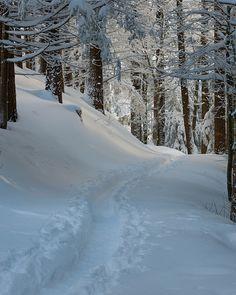 It reminds me of Provin Trails in the winter in Grand Rapids. Winter Szenen, Winter Magic, Winter Time, Winter Christmas, Prim Christmas, Winter Photography, Landscape Photography, Nature Photography, Winter Wonderland