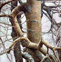 """Robert Bateman """"Ghost Of The North- Great Gray Owl"""" 1982 (detail) 