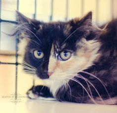 Scarlet was adopted on 9/13/14!