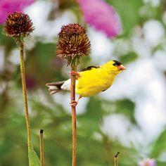 For the Birds: Organic Gardening