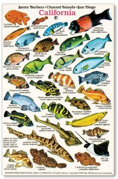 California and Baja Fish Identification Card fishcardscom