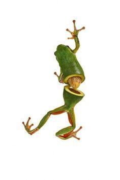 avocat-grenouille photos de Robert Jahns. + Sarah DeRemer photomontage