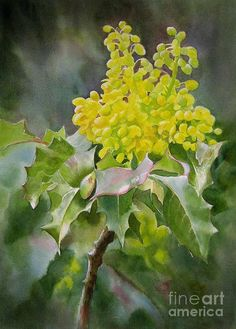 Oregon Grape Painting by Sharon Freeman - Oregon Grape Fine Art Prints and Posters for Sale