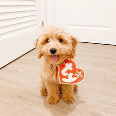 """Delightful 💕 (@delightfulgoldendoodles) posted on Instagram: """"Tag someone who needs a Beanie Baby in their life 😜❣️@minidoodmila #delightfulgoldendoodles • • • • • #goldendoodle…"""" • Oct 12, 2020 at 2:29am UTC Spooky Scary, Goldendoodle, Mermaid, Beanie, Teddy Bear, Tags, Life, Animals, Halloween"""