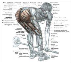 workout anatomy - Google Search