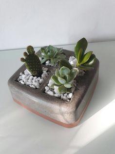 Vaso em argamassa de cimento com suculentas