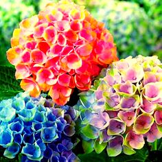 Photo of beautiful flower for fans of Flowers.