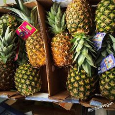 When you can't go to the Tropics, you bring the tropics to you! ;)  THIS many organic pineapples in the house should do the trick  #pineapple #fruit #raw #organic #healthy #vegan #vegangram #veganshare #healthylife #vegansofig #vegetarian #glutenfree #dairyfree  #healthyeating #healthyliving #eatwell #eathealthy #eatcolourful #cleaneats #plantbased  #fitspo #fitfood #fitfam #foodporn #whatveganseat #fitness #instafit #nutritious #food