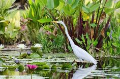 The Naples Botanical Garden is simply a must-do for nature enthusiasts. It's comprised of six gardens, 2.5 miles of walking trails, and 90 acre nature preserve.