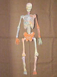 skeleton puzzle szkielet człowieka