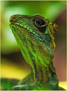 Its Not Easy Being Green by Paul Hildebrandt