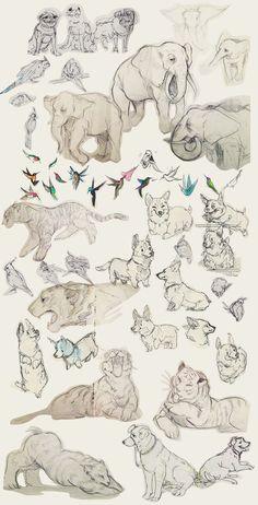 Зарисовки животных от акулы-бомбы