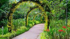Ботанические сады Сингапура – излюбленное место отдыха местных жителей и обязательная к посещению достопримечательность Сингапура.