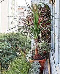 Você não precisa morar em casa ou sequer ter uma varanda para montar um belo jardim. O batente da janela deste apê ganhou vasos com folhagens de diversas espécies!
