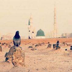 Ya Allah,please let me die and be buried here. Islam Religion, Islam Muslim, Allah Islam, Muslim Pray, Islamic Images, Islamic Pictures, Islamic Art, Al Masjid An Nabawi, Masjid Al Haram