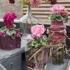 Cyclamen Scholten Pastel (©TheInspirationtable) Beautiful Flowers, Glass Vase, Pastel, Cottage, Table Decorations, Garden, Plants, Pink, Furniture