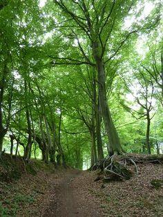 Wandelen in het Kluisbos Walkabout, Homeland, Belgium, Netherlands, Greenery, Hiking, Space, Plants, Travel
